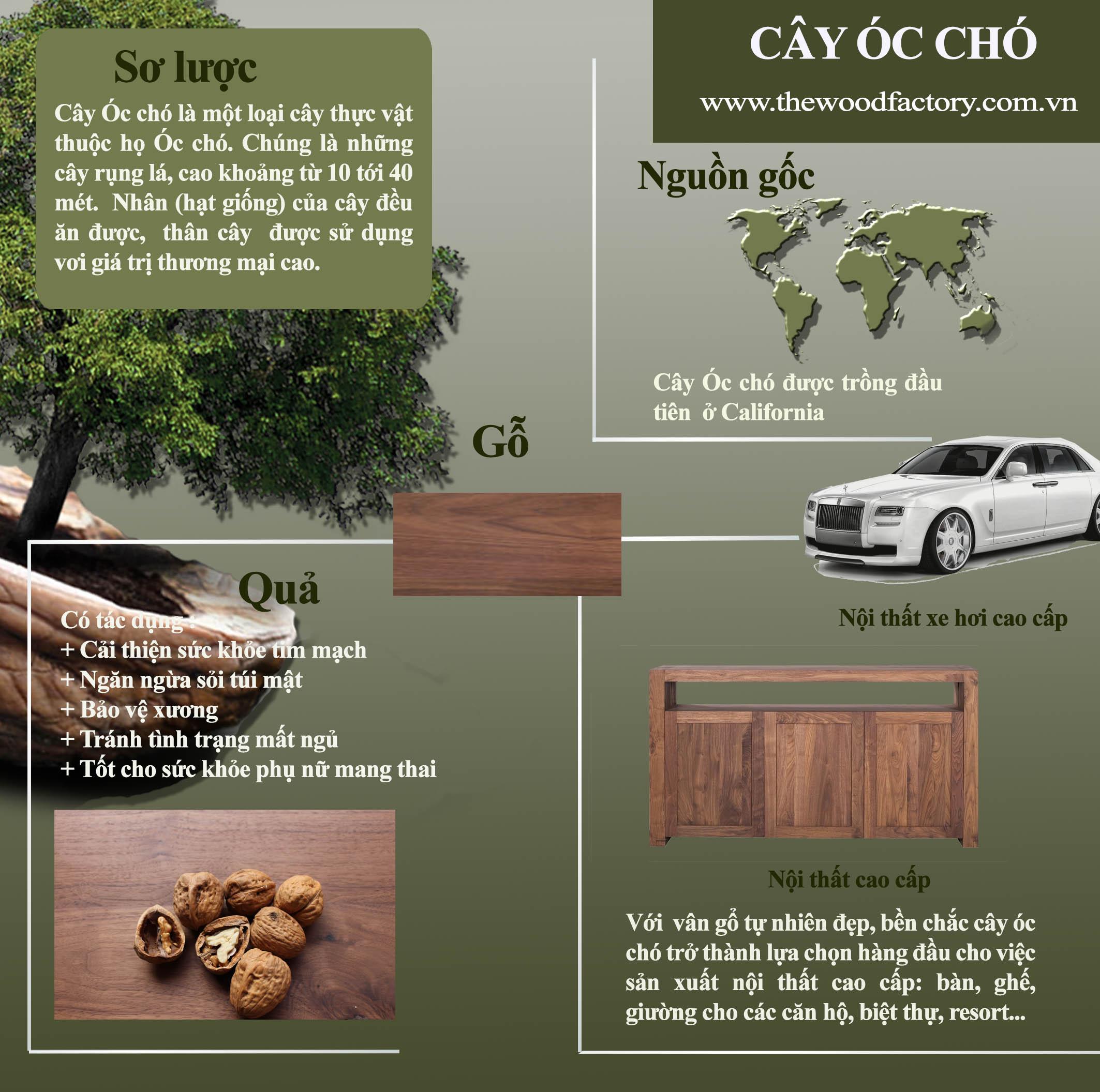 [Infographic]: Cây Óc Chó